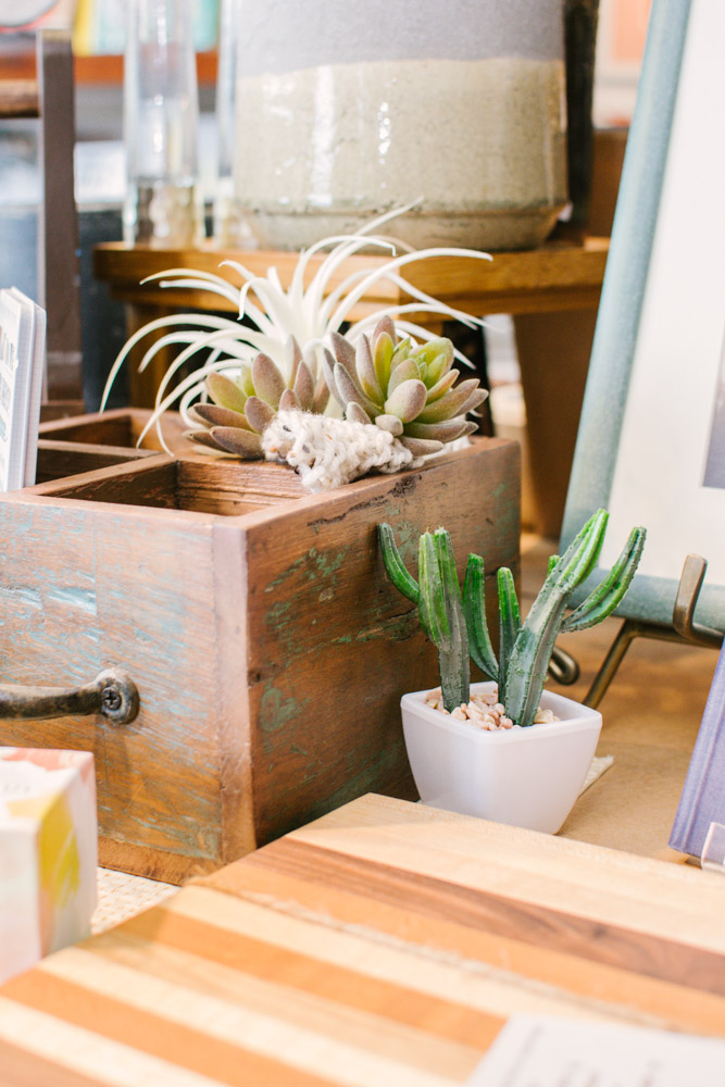 succulents in thinking