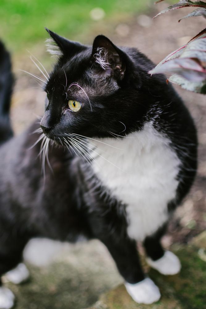 rescued black cat portrait