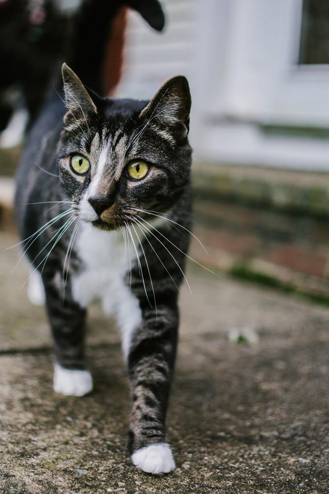 black and grey boy cat