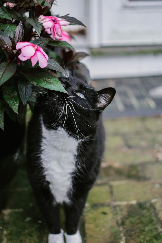 tuxdeo cat