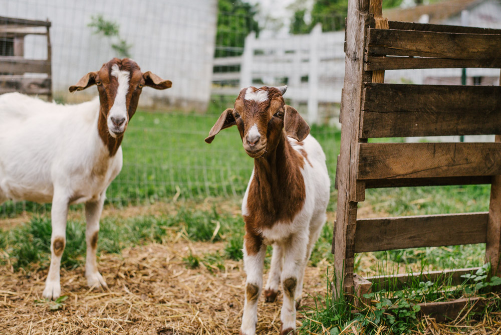 Here With Us Farm Sanctuary by Chris Corrao